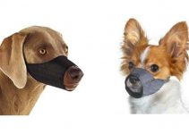 Top 10 Best Dog Muzzle for Small Dogs of 2018 Review