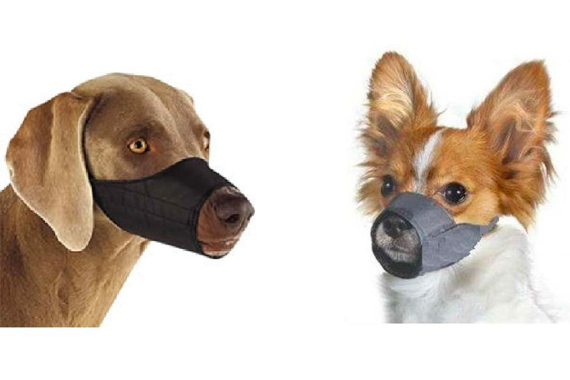 Top 10 Best Dog Muzzle for Small Dogs of 2021 Review