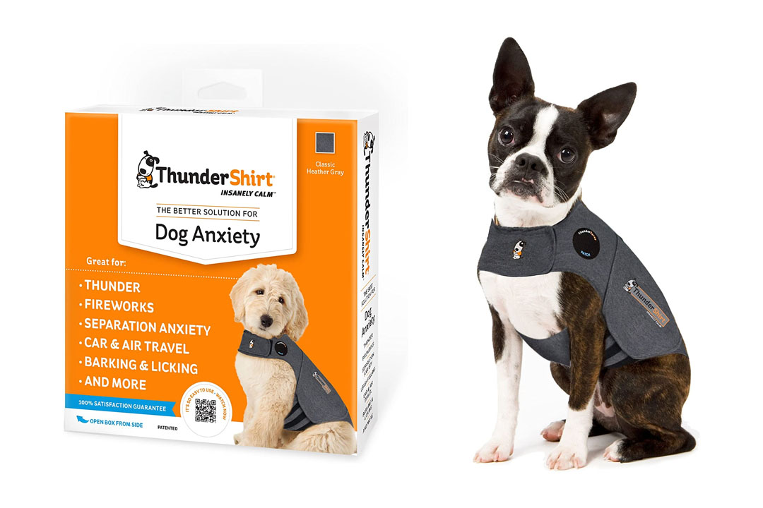 Dog Anxiety Solution