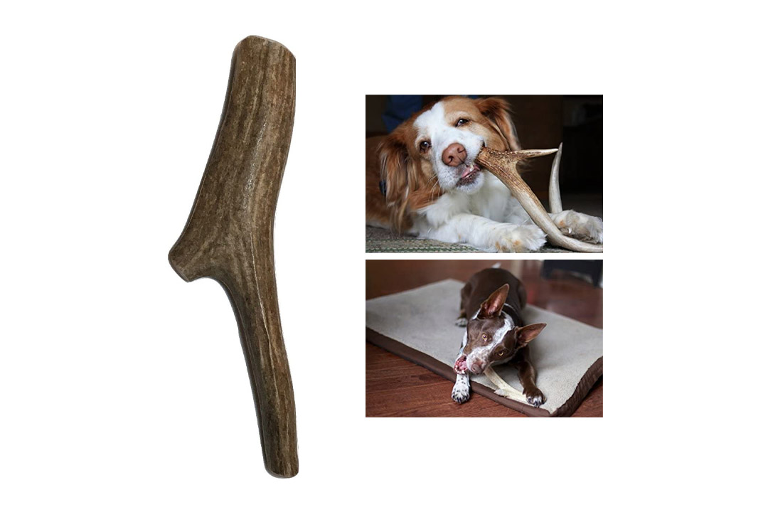 Deer Antlers for Dogs, Premium, Grade A, Deer Antler Dog Chew